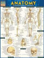 Details for Anatomy